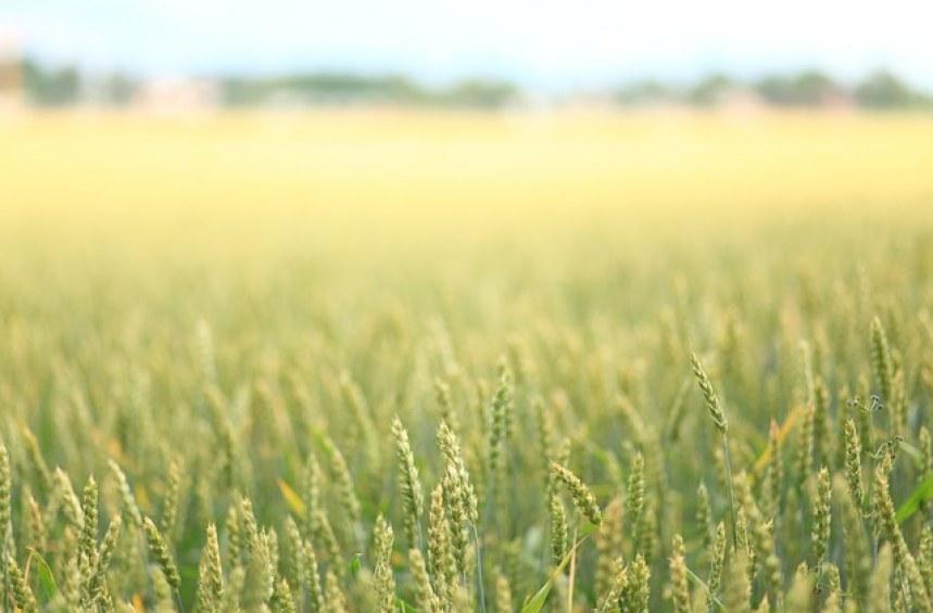 Не съм заявил, че ще обработвам земята си. Какви са последиците?*