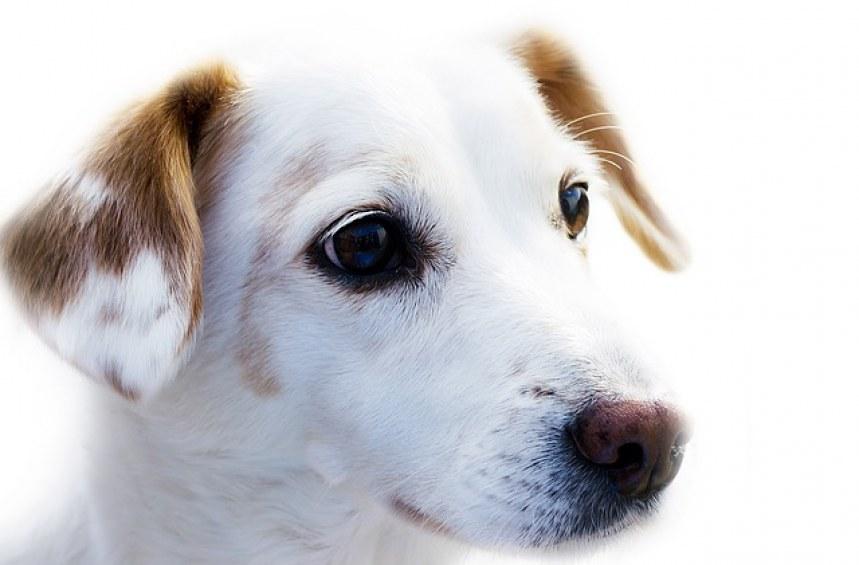 Как да регистрирам куче на територията на Столична община?