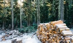 """Какви наказания """"грозят"""" нарушителите в горските територии?"""