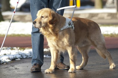 Правото ми да имам куче-водач