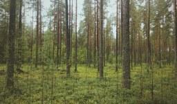 Възстановяване на собствеността върху гори