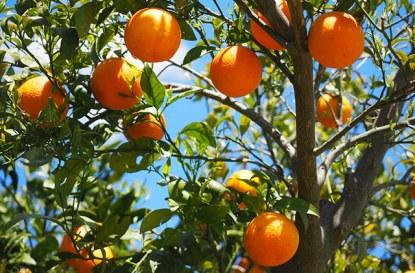 Отсичане на селскостопанско дърво – кога и как?