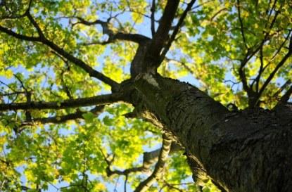 Искам да отсека дърво в двора си. Колко сложно може да бъде?