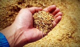 Какви права имам като регистриран земеделски производител?