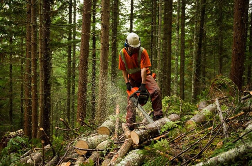 Отсичане на дърво в моя горска територия